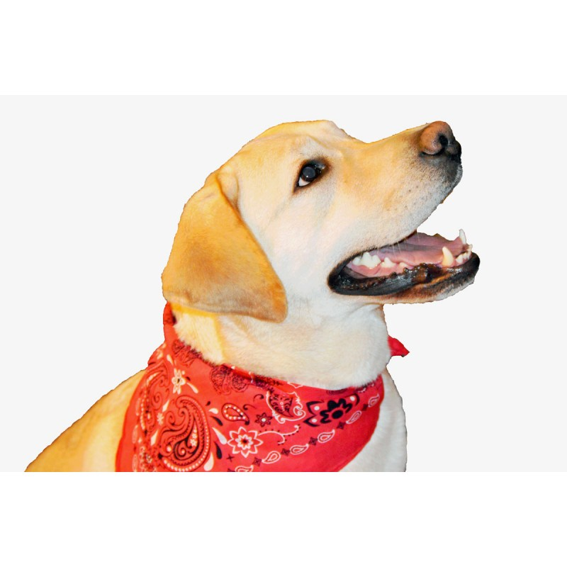 Lady Remington Pet Bandanas- Style 125 American Flag