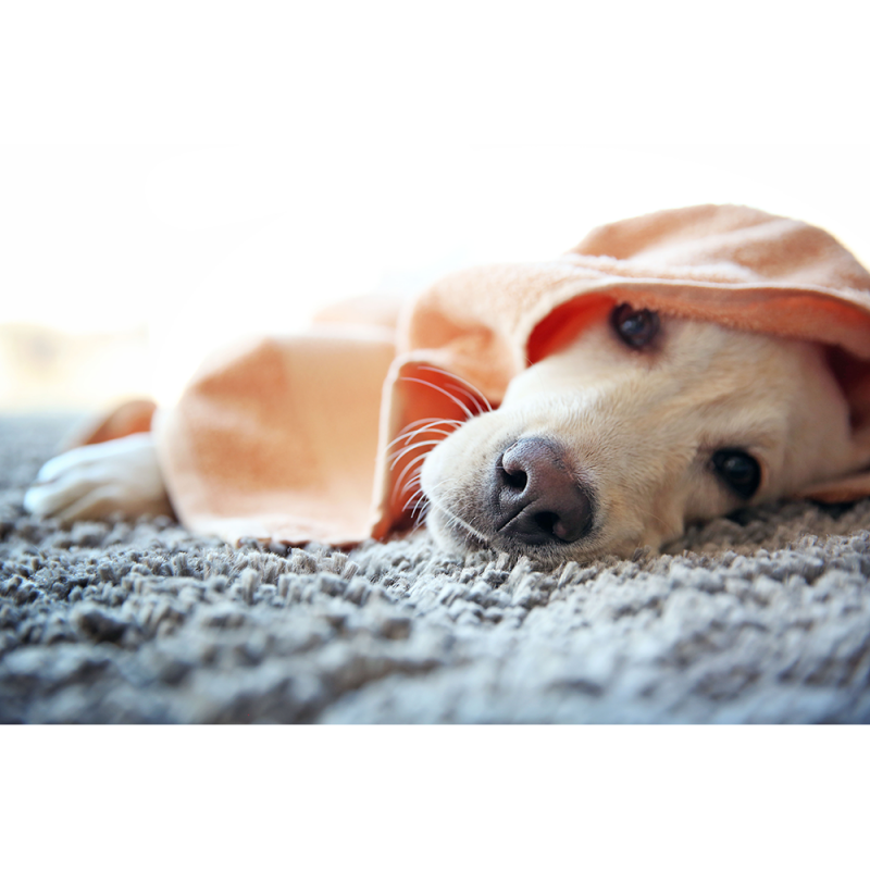 Terry Cotton Pet Towel - Style  LR 138 Pink