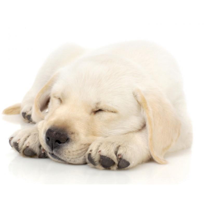 "Lady Remington Pillow 17""  Artist Lab Puppy Style LR03"